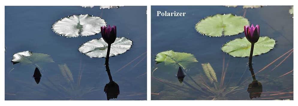 Filtro polarizzatore