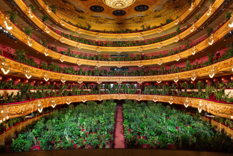 Concerto Barcellona con piante