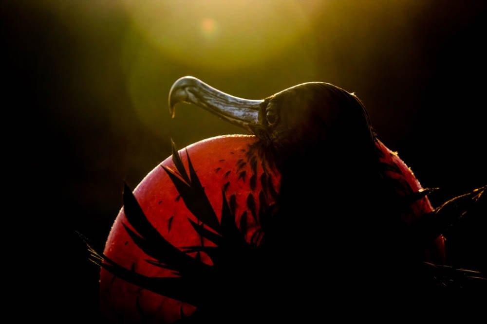 Audubon Photography Awards 2020 vincitori