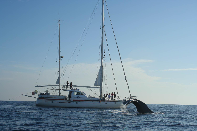 Canon Cetacean Sanctuary Research