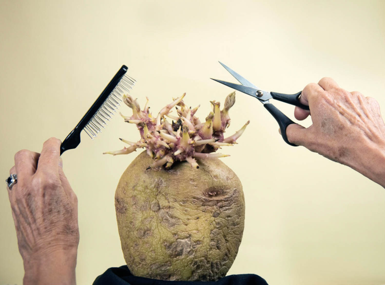 Potato Photographer of the Year 2020