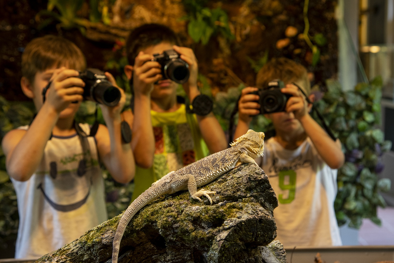Nikon Ciabot degli animali