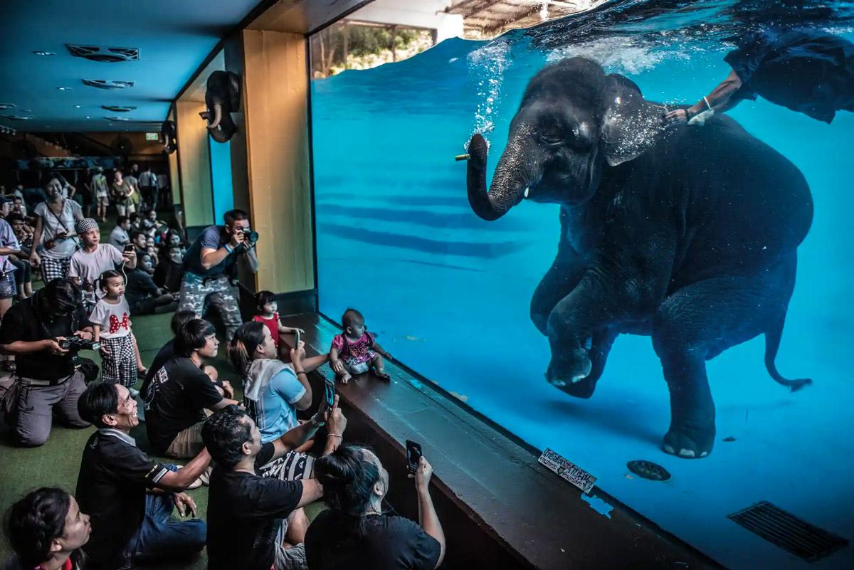 Wildlife Photographer of the Year 2021 vincitori